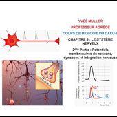 Chapitre 5 - 2ème Partie : Potentiels membranaires du neurone, synapses et intégration nerveuse