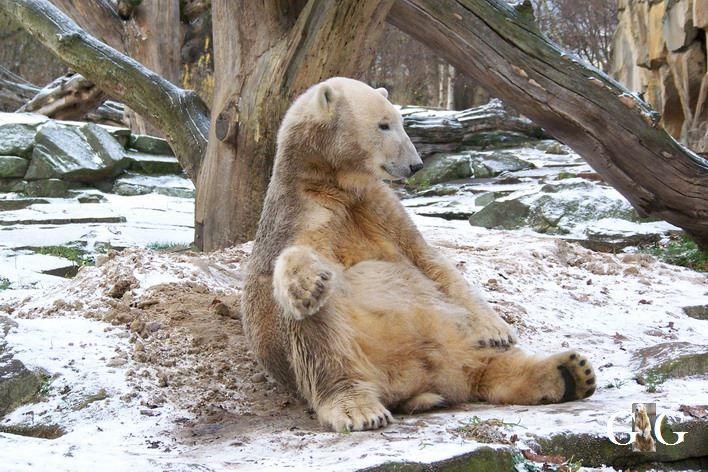 Erinnerung an Knut zum 10.Todestag 19.03.2021