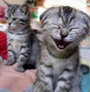 Funny cats : les chats marrants - videos compilation