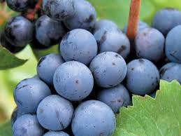 #Meritage Producers Michigan Vineyards