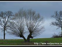 L'arbre à 2 têtes ...