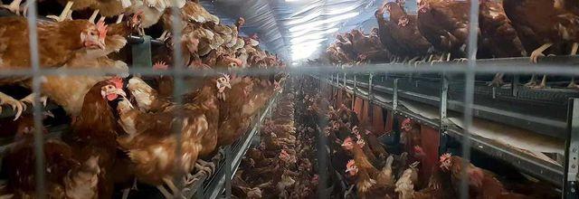 Inédits, Pauvres poulets et L'homme a mangé la Terre, ce soir à 20h50 sur Arte