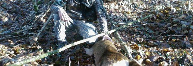 récit de chasse aux chevreuils.