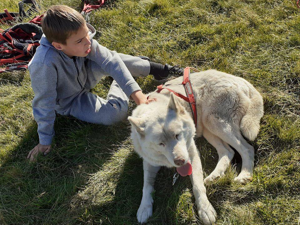 Cani-rando à Murat le Quaire