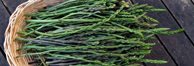 L'asperge sauvage, un légume de printemps typique de la garrigue