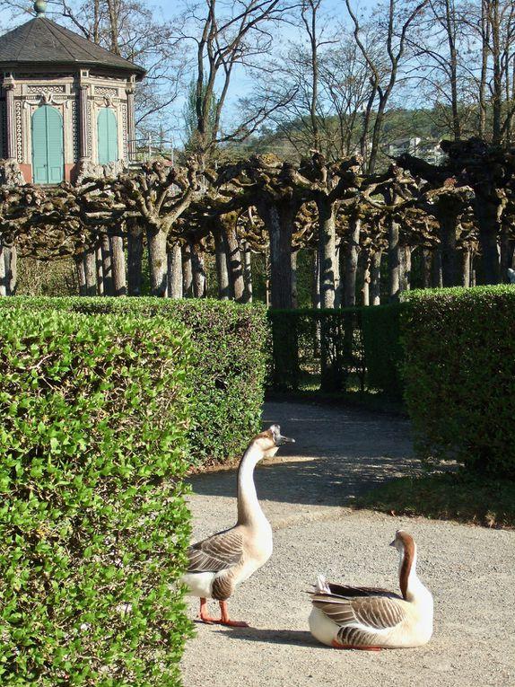 Impressionen Veitshöchheimer Hofgarten von Ilse Feser