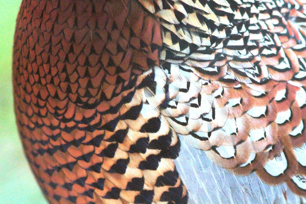 Album 1h - Nature et paysages 2015