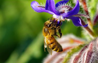 Chasse au pollen