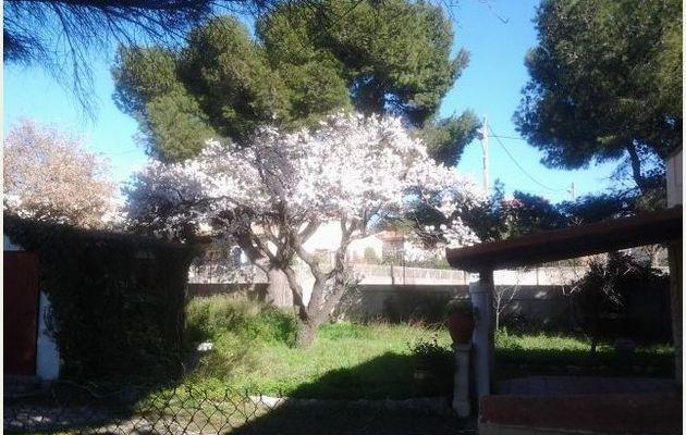 La nature le printemps