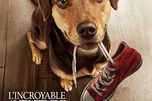 L'INCROYABLE AVENTURE DE BELLA (A dog's way home)