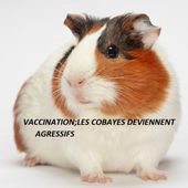 Vaccination : les cobayes deviennent agressifs