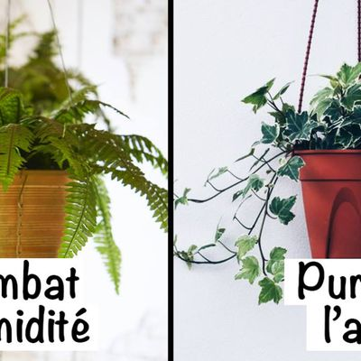 Meilleures plantes d'intérieur pour améliorer l'air de votre maison