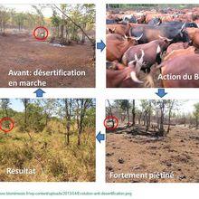 Pour « sauver le climat » : le bétail !
