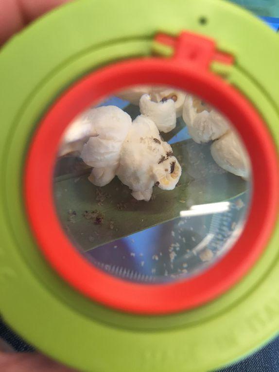 kit d'élévage de coccinelles  larves de coccinelles sur charlotteblablablog