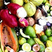 Ludovic Minoué : fruits locaux et spécimens rares - JeuneAfrique.com