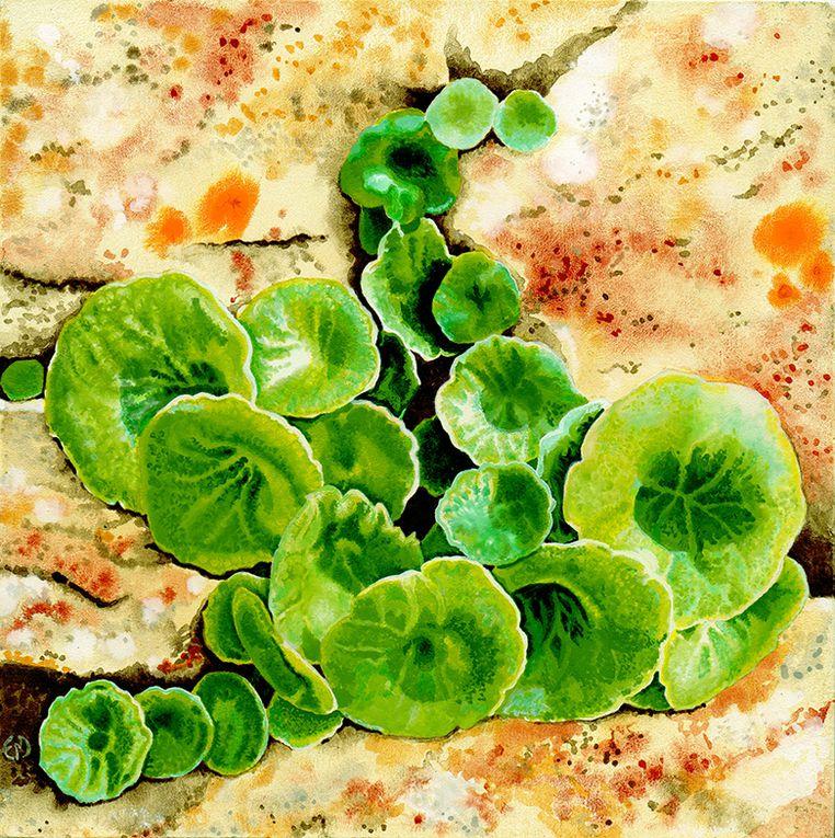 Titre, format, prix sont dans la rubrique TABLEAUX : Paysages et végétaux