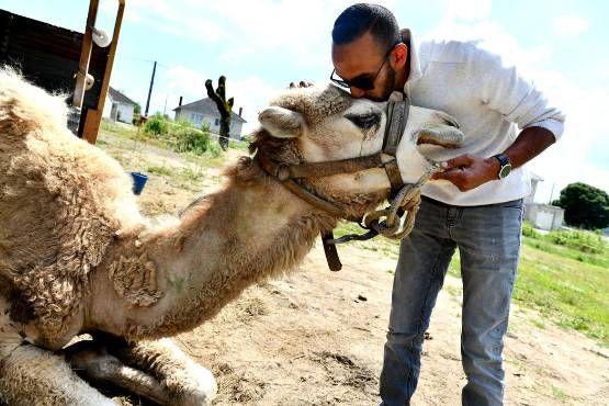 ils feront battre  pour vous le coeur du deuxième salon des camélidés : namir glif ,21 ans à fréquenter  les animaux