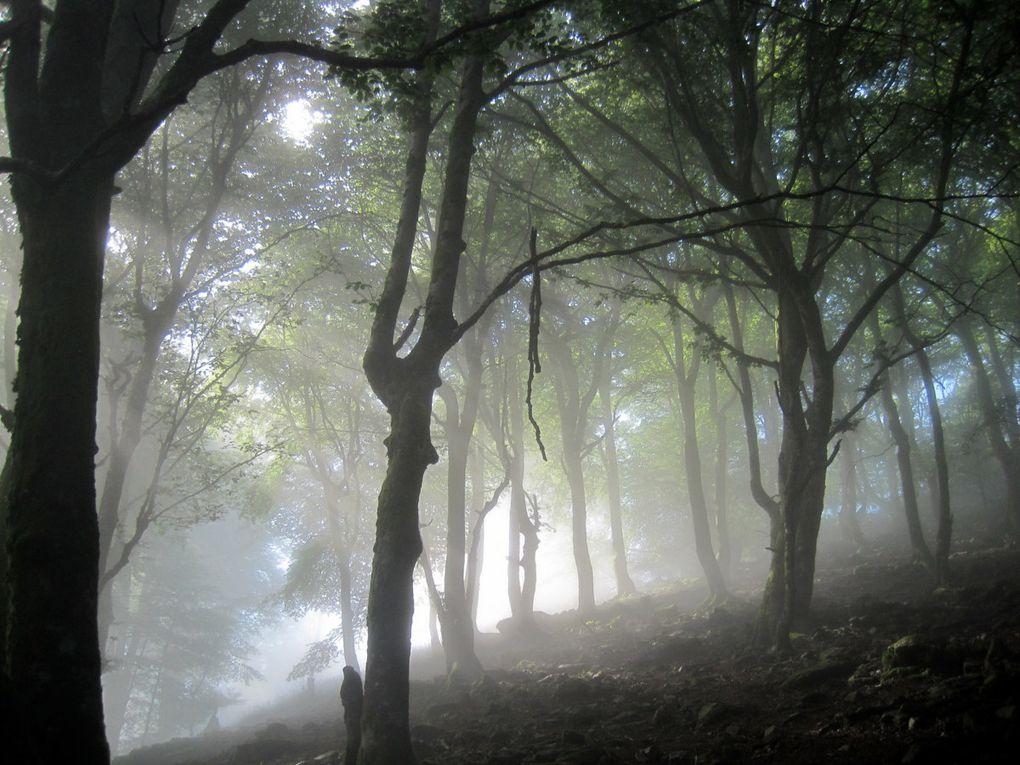 Aujourd'hui très belle randonnée au dessus des nuages. Nous avons démarré cette rando dans la brume qui donnait une impression de mystère dans la forêt. Mais rapidement nous étions au dessus des nuages et avons pu admirer la vallée sous une chape de brume. Un petit vent a rafraichi cette journée que nous craignions très chaude. Notre année sportive se termine bientôt . Merci aux animateurs pour nous faire partager des si bons moments ! https://photos.app.goo.gl/hCs3t6Su6YsitMme9