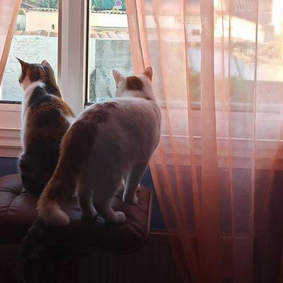 chronique Lennon : Lennon et Marinette à la fenêtre