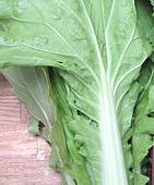 Oriental Leaf Greens vegetable seed from The Real Seed Catalogue