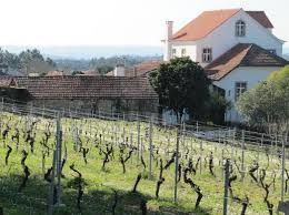 The Dão and Vine In Central Portugal