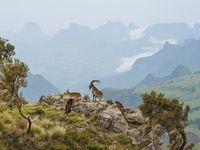 Photos du parc du Simien