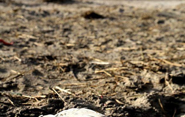 Quels pourraient être les enjeux ainsi que les réalités d'une Justice climatique mondiale?