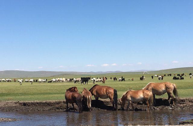 Lait corporel à l'huile d'argousier de Mongolie