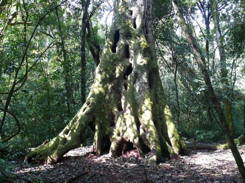 Ambiance tropicale (La forêt autour des Saltos de Mocona)