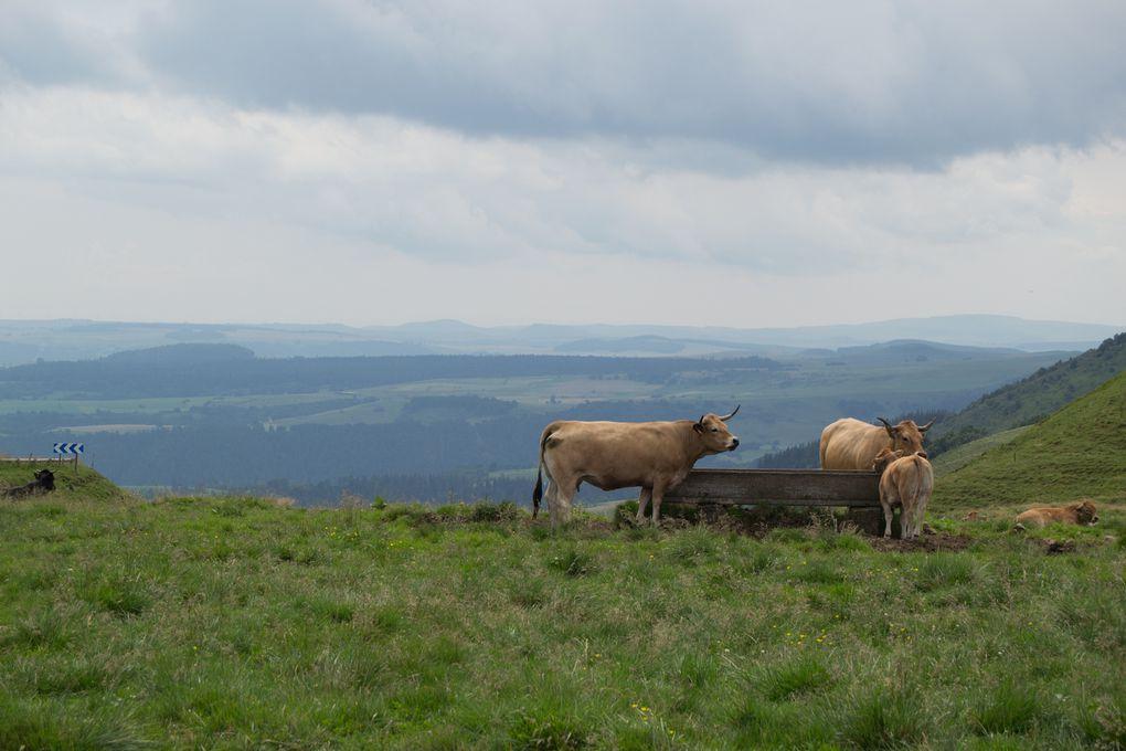 Auvergne 21 au 30/07/2014