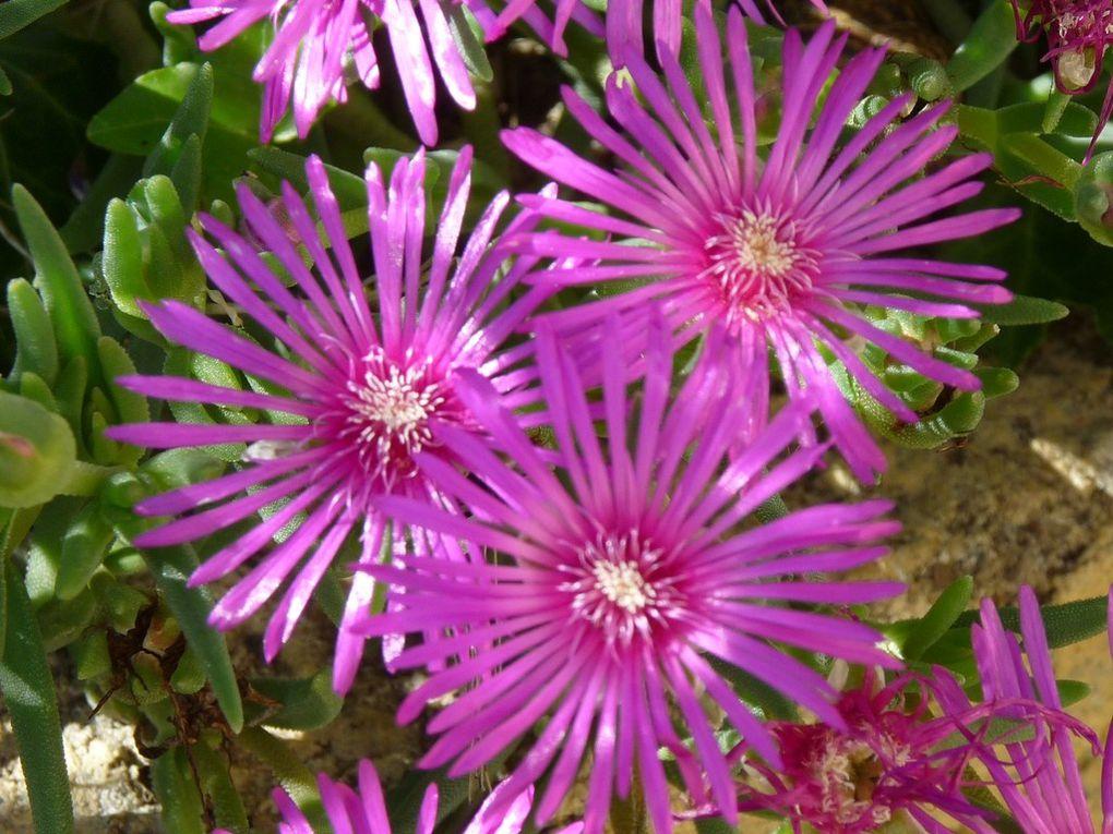 Fleurs 113