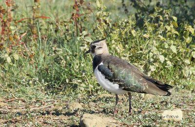 Sortie observation au Domaine des Oiseaux