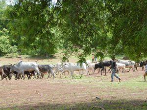 CREN de Fara au Burkina Faso