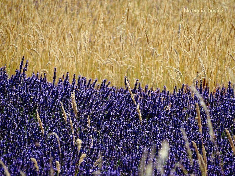 Senteurs de Provence