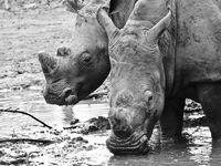 WILDLIFE en AFRIQUE DU SUD 🇿🇦