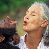 JANE GOODALL - Le blog de Chemins-Spirituel-ROSE