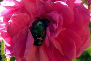 Fleurs https://t.co/B1w4U80okD #Nature