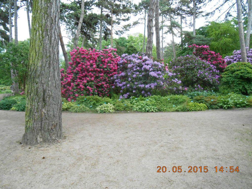 balade au parc floral de Vincennes