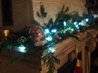 Esprit de Noël