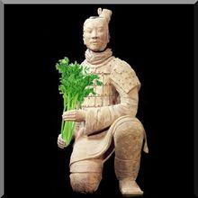 Jardinage bio : le chou, ses compagnons de jardin et ses défenseurs naturels - Nature(s) Paul Keirn