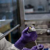 Coronavirus : comment le dépistage à grande échelle pourrait venir à bout de l'épidémie