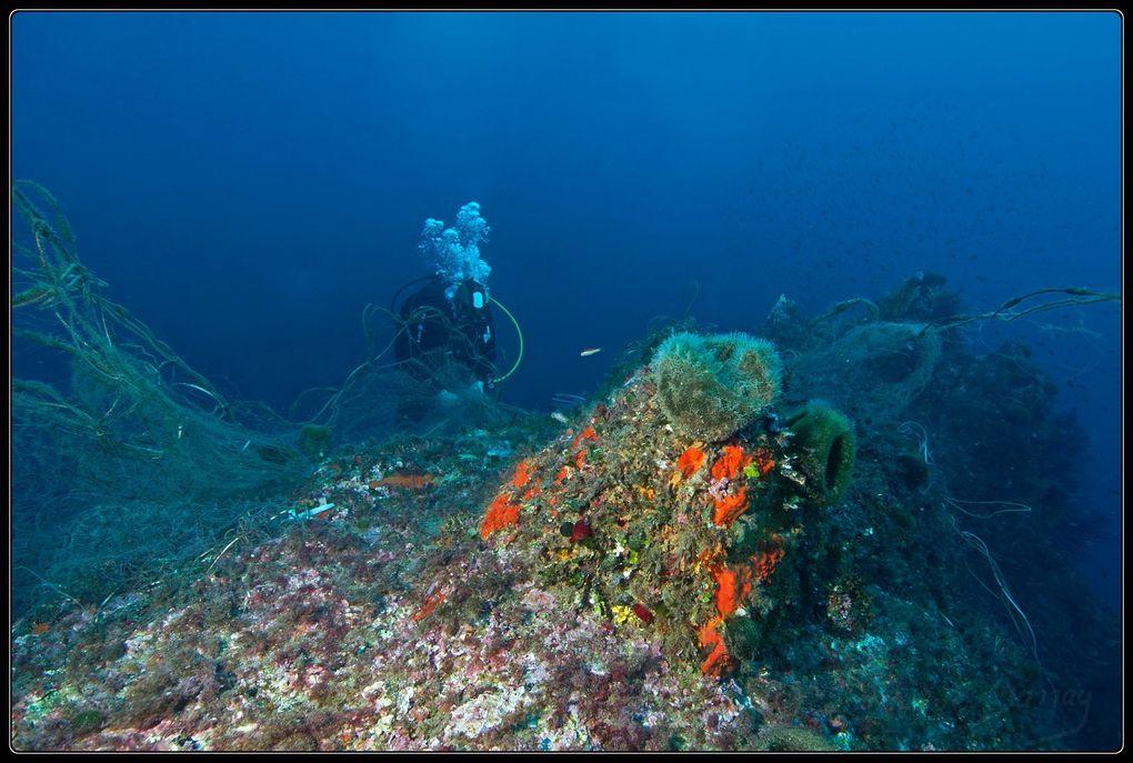 Sauvetage de 2 cigales de mer prises au piège dans un filet perdu.