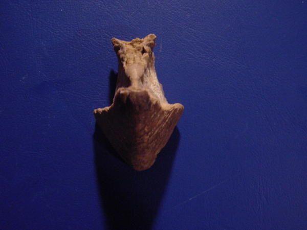 <p> Voici enfin rassemblées vos découvertes, fruit de fouilles harassantes, par tous les temps ! </p> <p> Les pièces ici présentées appartiennent à mes amis proches, et ont été fréquemment découvertes lors de sorties communes. </p> <p> Vous aussi pouvez nous envoyer les photos de vos meilleures trouvailles et quelques explications à des fins de parution. Merci ! </p> <p> Phil « Fossil » </p>