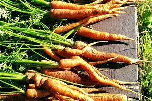 Des radis, des carottes, des courgettes, des tomates...