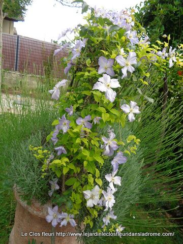 """Mon jardin """"Le Clos fleuri """" en juin 2020"""
