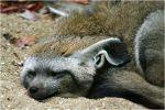 Zoo de Beauval - les petits mammifères