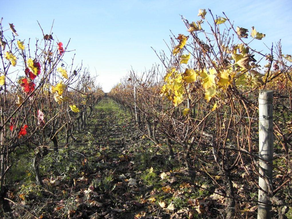 """Rando des """"6 Km"""" entre vignes et forêt"""