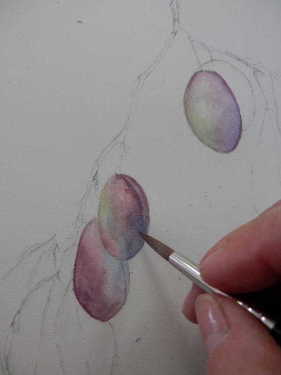 Aquarelle pas à pas: les-prunes