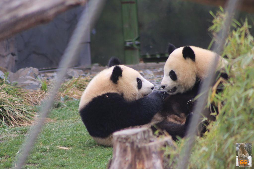 Besuch Zoo Berlin 23.04.+25.04.21