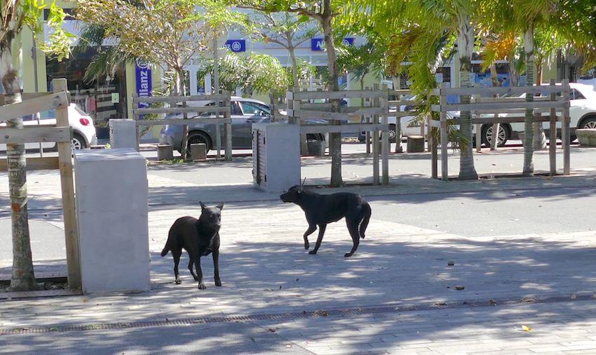 fourrière Cinor chiens errants fondation Brigitte Bardot île réunion